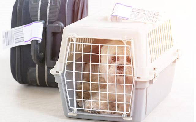 Planejamento de uma viagem com cachorro para Miami