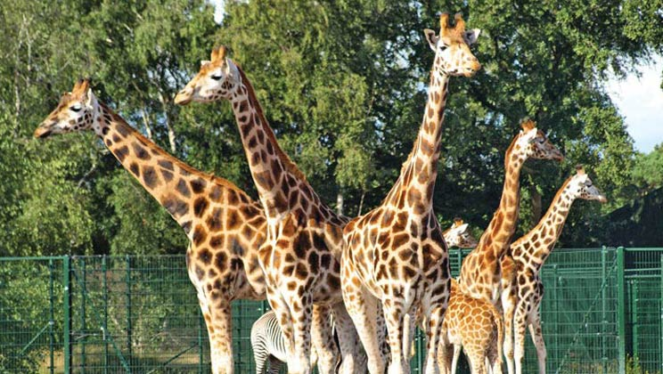Spending May Half Term in Holland (on a budget) - Beekes Bergen Safari Park