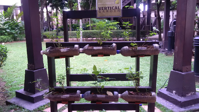 gardening, growing plants in pet bottles,malaysia travel influencer,  malaysia influencer,  blog with cris,  malaysia blogger,  malaysia freelance model,  plastic bottle garden plants,  how to grow plants in waste bottles,  suitable plants for bottle garden,  self watering plants with plastic bottles,  plastic bottle garden wall,  bottle plant tree,  bottle plants decoration,  self watering system for plants using waste plastic bottle,  plastic bottle garden plants,  bottle tower garden instructions,  bottle plants decoration,  self watering bottle garden,  glass bottle garden ideas,  hanging soda bottle garden,  growing vegetables in plastic bottles,  plants that can grow in water bottles,  hydroponic soda bottle system,  planting seeds in plastic bottles,  growing plants in beer bottles,  how to grow plants in plastic containers,  bottle plantation,  what happens to recycled plastic bottles,  what happens to recycled plastic bags,  what happens to recycled glass,  recycling plastic bottles facts,  what happens to recycled paper,  what happens to recycled cardboard,  water bottle made from plants,  plant plastic,  pla bottle manufacturers,  plantbottle,  plant based packaging uk,  biodegradable water bottles,  malaysia growing plant, malaysia ideas, vertical gardening,