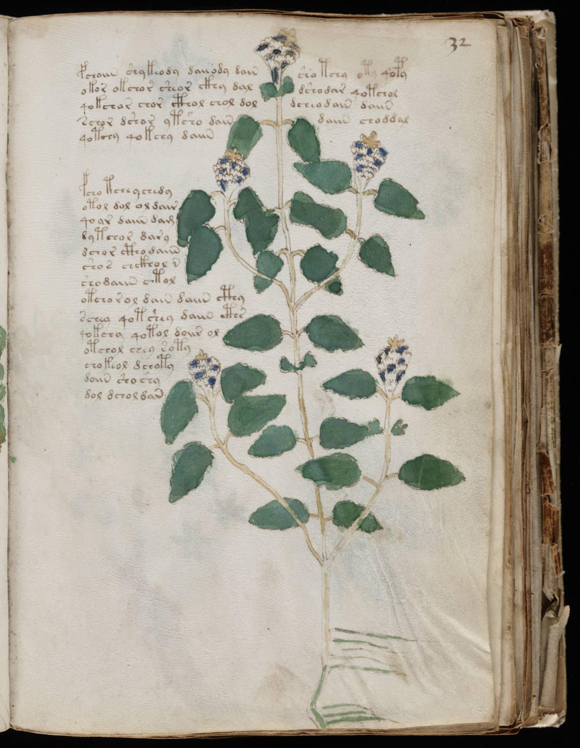 manuscrito061