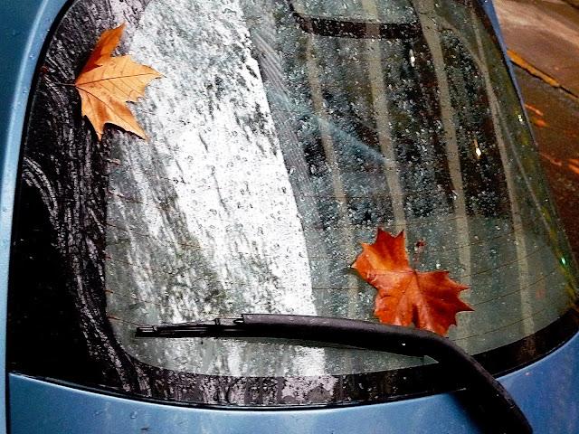 Foto de un día de lluvia.Ojas en la luneta de auto