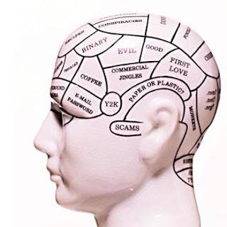 Human brain development newborn to adult