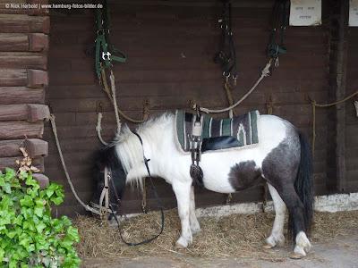 Ponyhof Hamburg, Pony, Pause