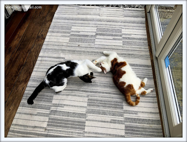 Amber and Melvyn Synchronised Snoozing - Oh Bugger, things just got real @BionicBasil The Pet Parade 292