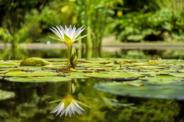 мальчик подошел к небольшому декоративному пруду, предназначенному для полива растений, и упал в воду