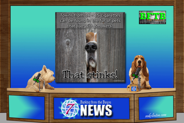 BFTB NETWoof News reporting on 4Knines article about pet cancers