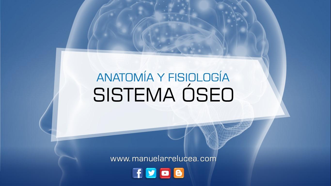 Anatomía y Fisiología: RESUMEN DEL SISTEMA ÓSEO