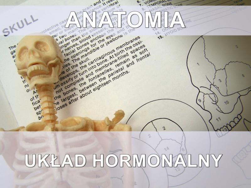 sciaga-z-anatomii-uklad-hormonalny