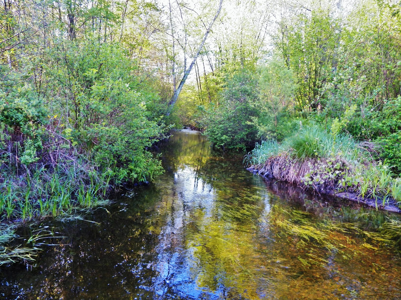 Connecticut fly angler ct small stream heaven for Fish and stream