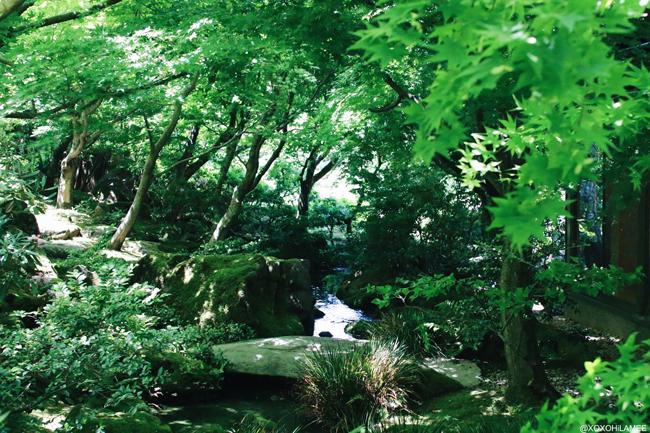由志園 池泉牡丹 島根県 花 日本庭園
