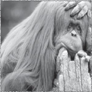 14 Hewan Langka dan Hampir Punah di Indonesia