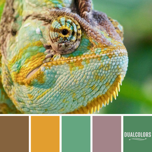 color_paleta_169