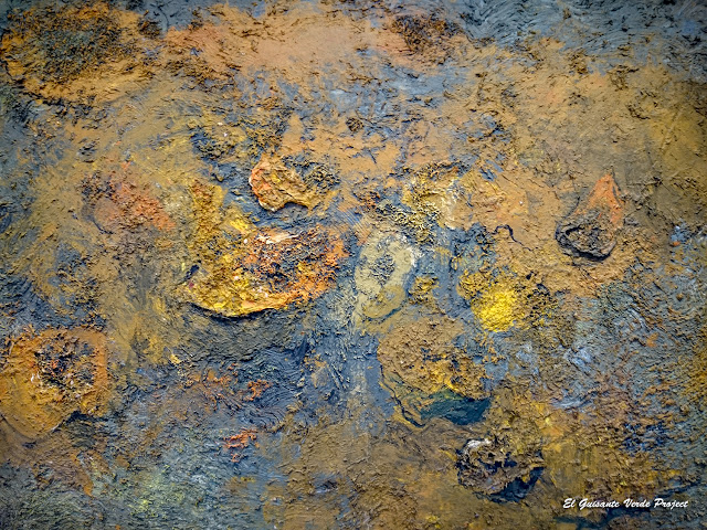 Des potirons (detalle), Miquel Barceló - Museo Bilbao por EGVP