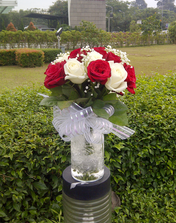 beutifull red roses