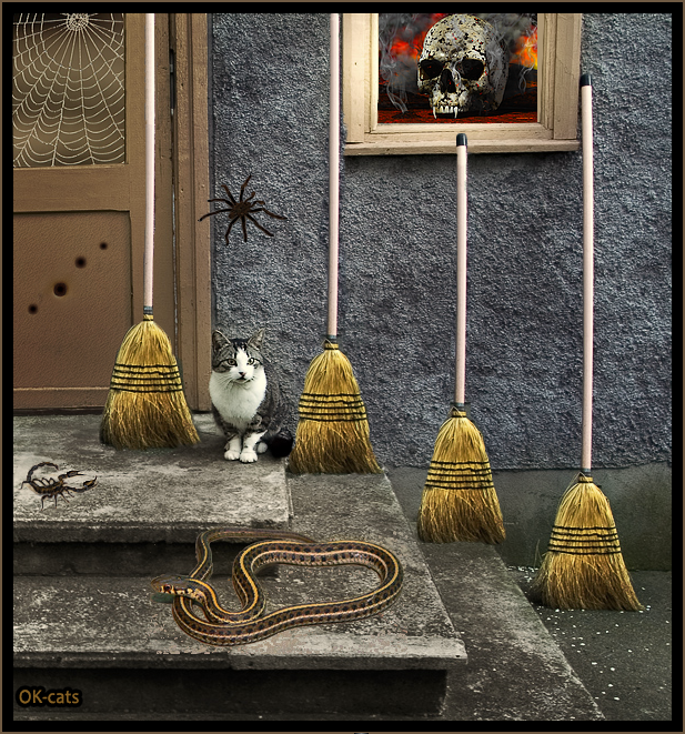 "Photoshopped Cat picture • ""Don't know why but... I sense danger"" (Scorpion + Snake + Giant spider)"