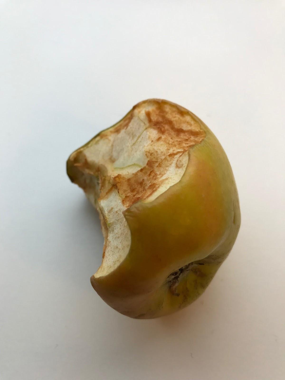 81d4e77f4df5 Kamelen står for sin del af affaldssorteringen. Hun bortskaffer alle  æbleskrog og gulerodsstumper.