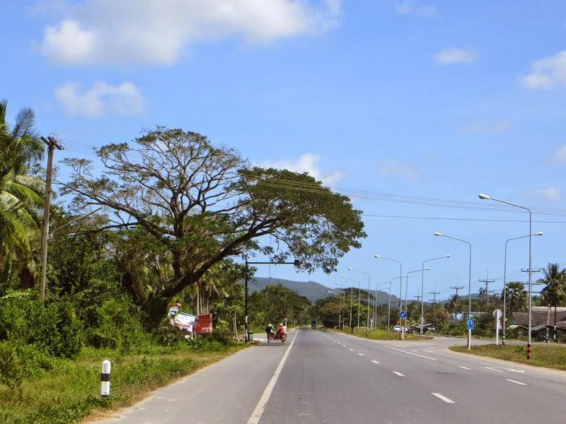 дерево над дорогой