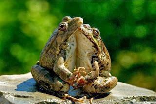 Pasangan hewan berpelukan
