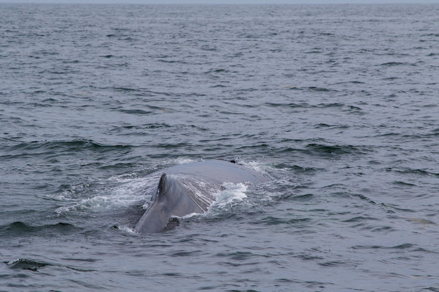 Gloucester-Whale watching