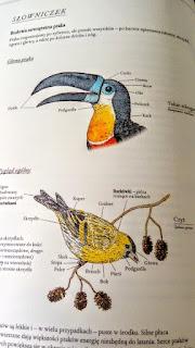 ilustrowany inwentarz ptaków zakamarki