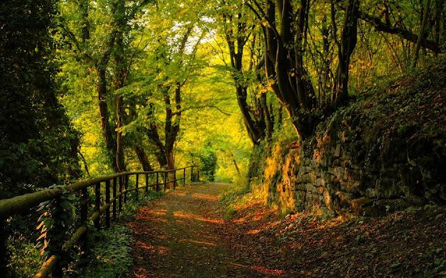4 υπέροχα δάση στην Πελοπόννησο για βόλτες και ποδηλατάδες