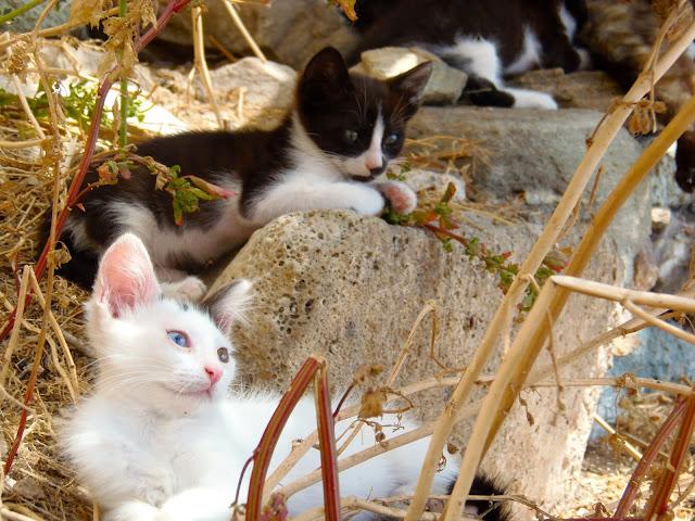 God's Little People Cat Rescue