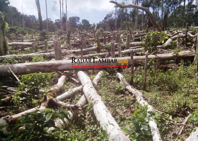 Diduga Ada Hutan Lindung Dibabat di Register 43 B