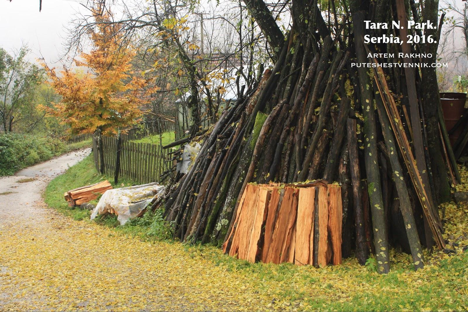 Срубленные ветви деревьев