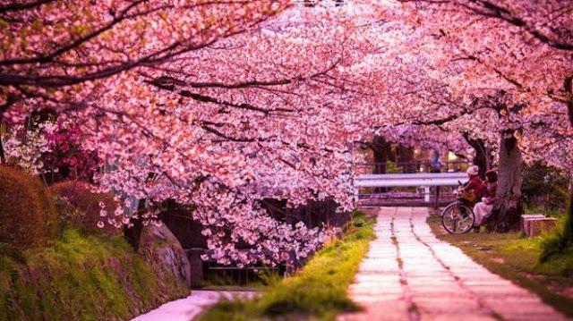 Tips Wisata Ke Jepang Dengan Bebas Visa