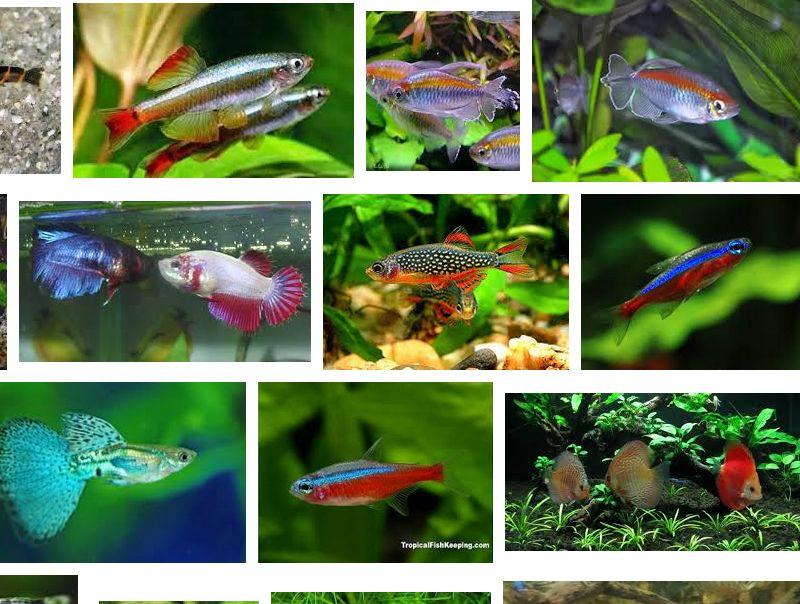 Jenis Ikan Aquascape