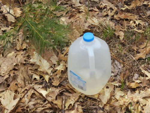 milk jug full of water in the woods