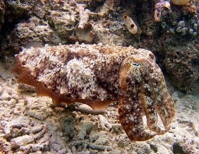 Kamuflase dan Mimikri di Dunia Binatang