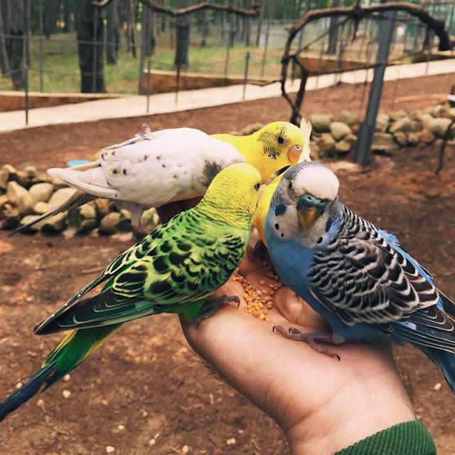 Zoodoo-nơi hòa mình vào thiên nhiên và muông thú