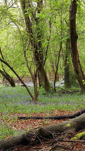 Ashridge Forest UK