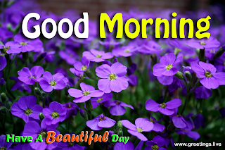 Morning greetings with purple Fresh flowers