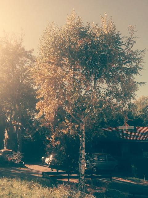 jesienny-krajobraz