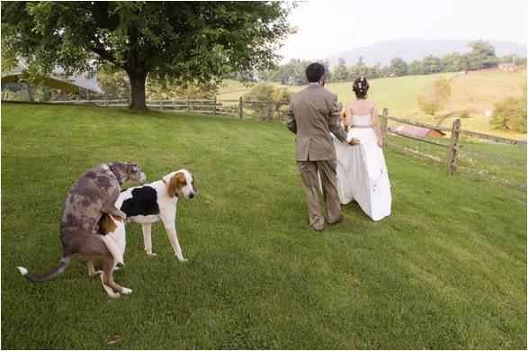 推薦比較wpja得獎ferless婚禮攝影vs台灣wppi婚禮攝影canon競賽nikon