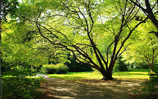 Antara pohon yang baik dan yang jelek