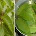 Estas maravillosas hojas esconden el fin de la diabetes y el colesterol alto