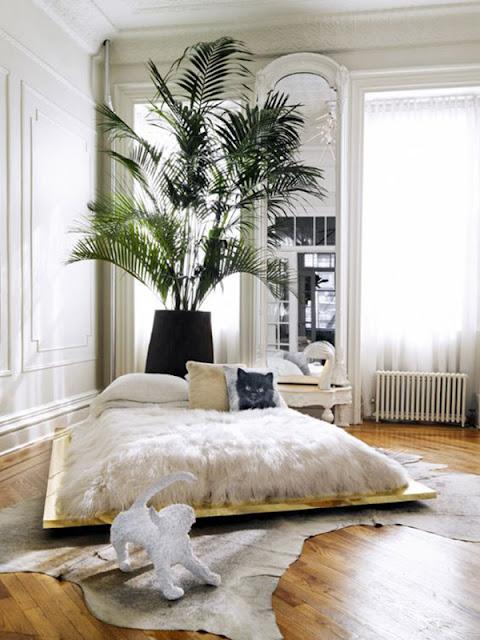 plantas-no-quarto-palmeira-abrirjanela