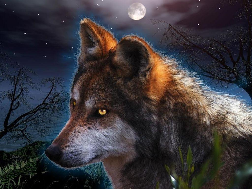 mashababko: Wolf Wallpaper Desktop