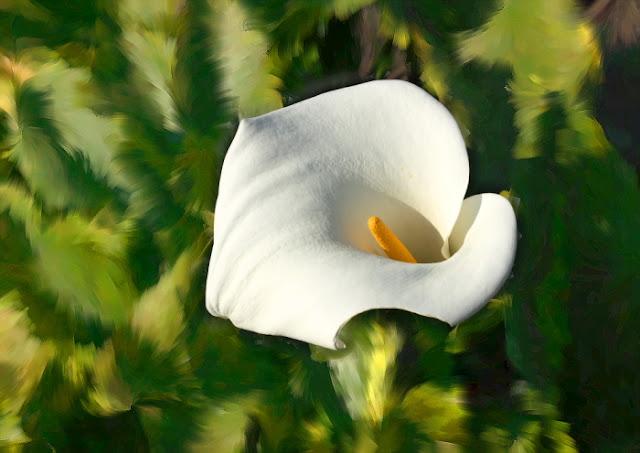 foto pintura de flores, flores impresionistas, fotografías impresionista de flores