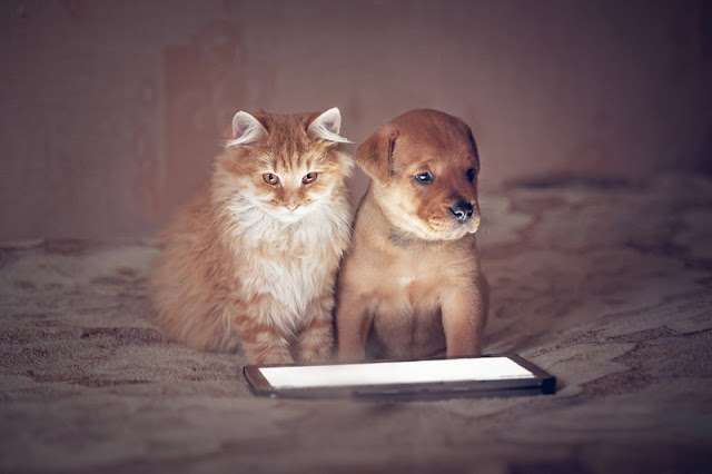 A cat and a puppy complete the survey of readers