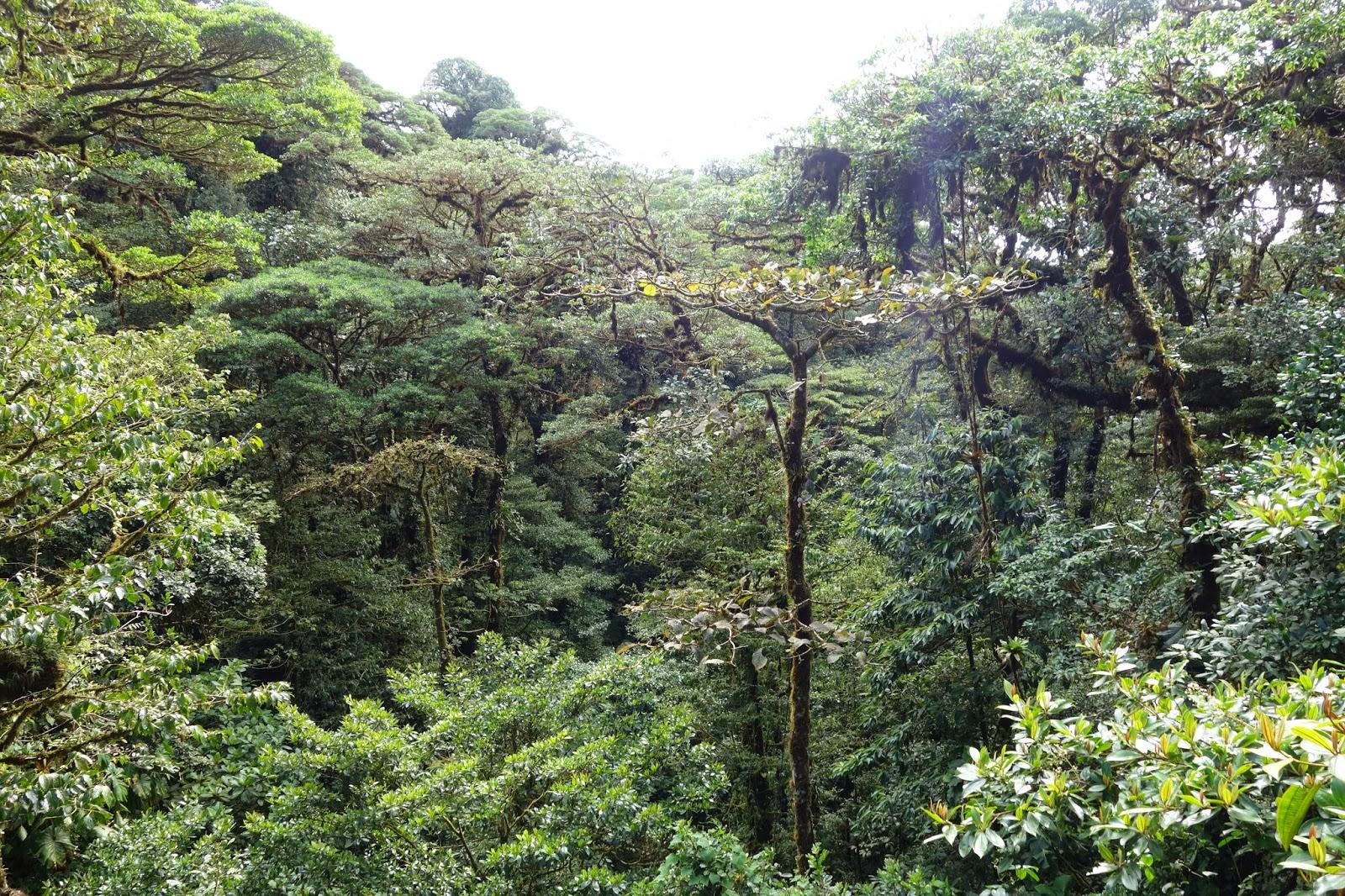 randonner au parc national monteverde quoi faire