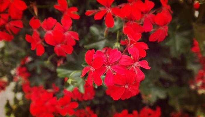Flores para exterior