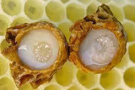 Pengertian Royal Jelly dan Kandungan Nutrisinya