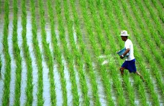 usaha pertanian di Indonesia