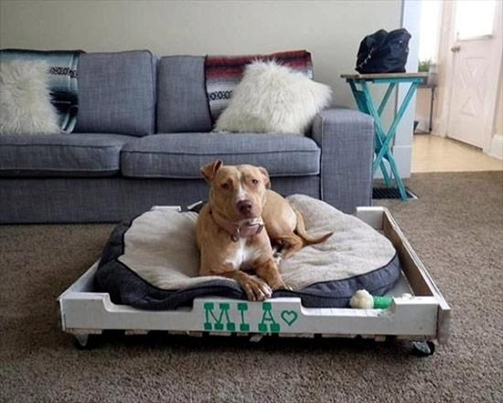 Nếu trong nhà có thú cưng thì bạn còn có thể biến những thanh pallet gỗ cũ để tạo nên lãnh thổ riêng cho con vật yêu quý của mình.