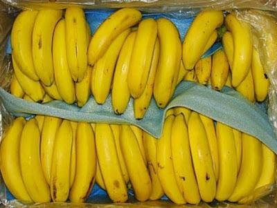 Ada banyak sekali jenis pisang di dunia ini Jenis dan Manfaat Pisang Ambon Bagi Kesehatan Tubuh