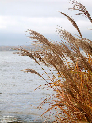 Photograph, grasses, Chesapeake Bay, Wind, Stormy, safe, Large, Peaceful